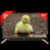 Pentanik 50 inch Smart Android LED TV 2